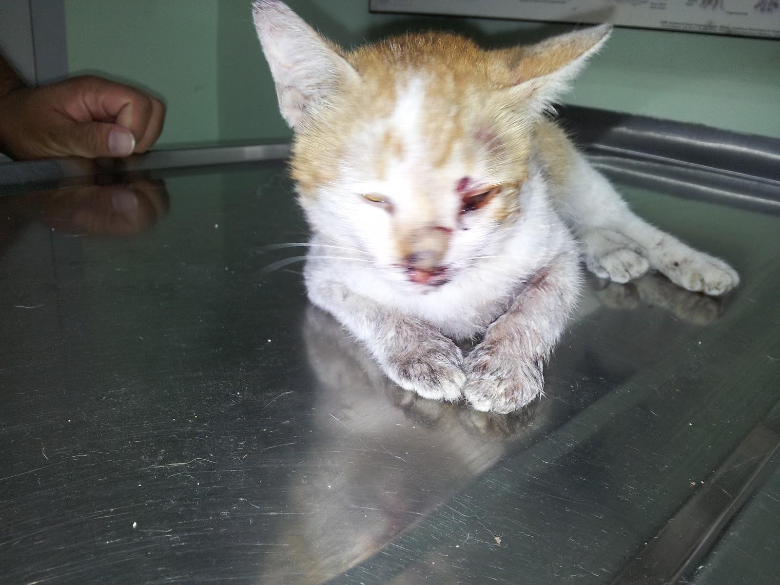 Kucing Betina Keluar Darah Quot Obat Cacing Anjing Kucing