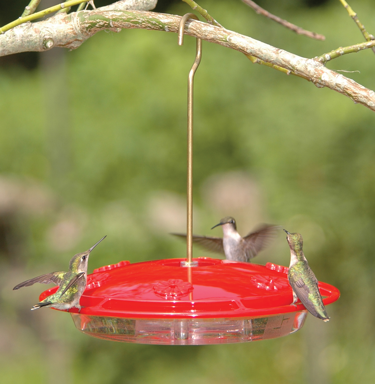 RichS Backyard Birds : Wild Birds Unlimited 7 Tips to feeding birds in the summer