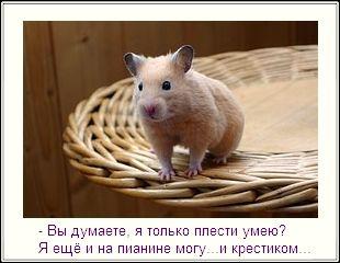 уникальная картинка для блога хомяк