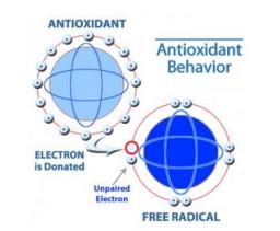 Anti Oksidan dapat melindungi rambut dari radikal bebas