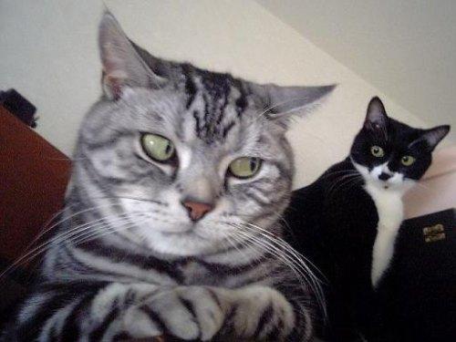kucing comel kelakar