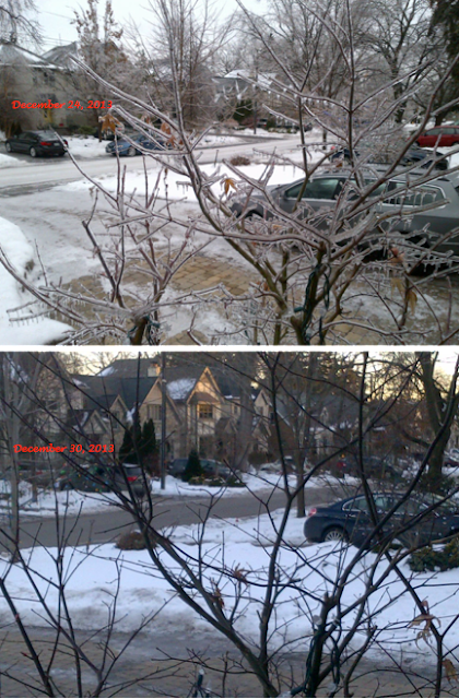 Ice Coated Branches (Click to Enlarge)