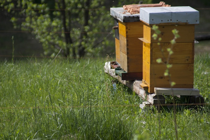 langstroth hive boxes in summer meadow