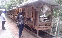 Kunjungan ke Peternakan Kambing Perah tgl 22 November 2013