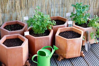 balcony_gardening