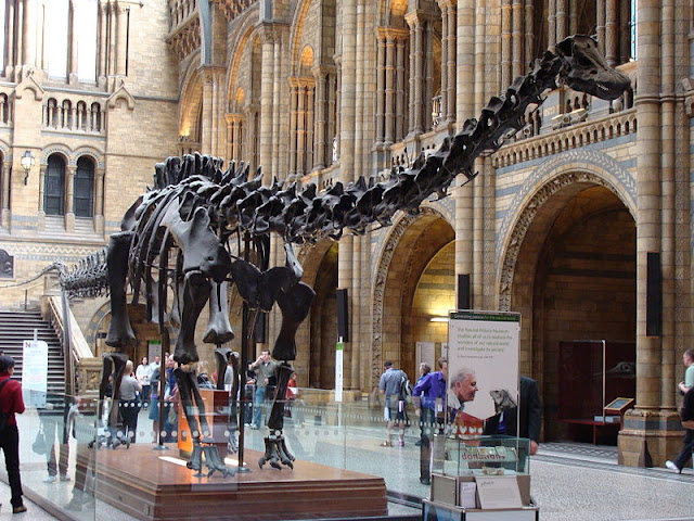 Natural History Museum, Central Hall, Diplodocus Dinosaur - London 2012, UK | Travel London Guide