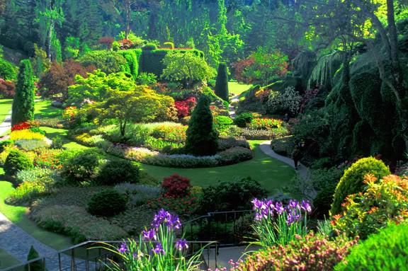 paisagem com árvores, plantas e flores de diversas cores