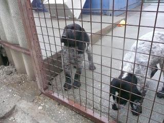 Siófoki Állatvédő Alapítványnak adományozás, 2015. december 27.