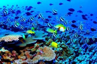 Best Honeymoon Destinations In Australia - Great Barrier Reef 1