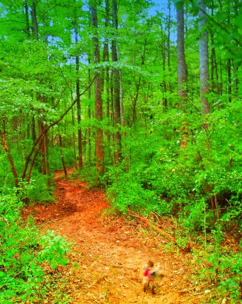 Croft State Park Campground Spartanburg South Carolina
