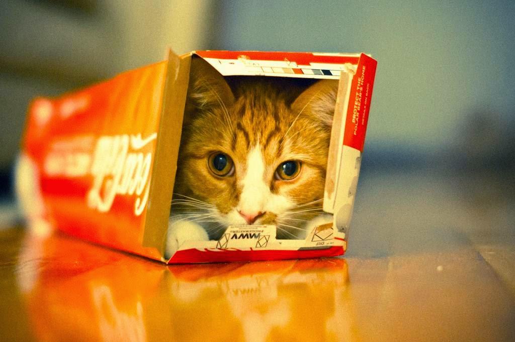 комплект другого почему коты так любят коробки работы термобелья, как