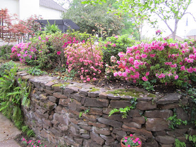Roses and Other Gardening Joys: Azalea Trail Highlights