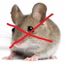 cara ampuh membasmi tikus