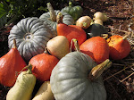 Great pumpkin recipes