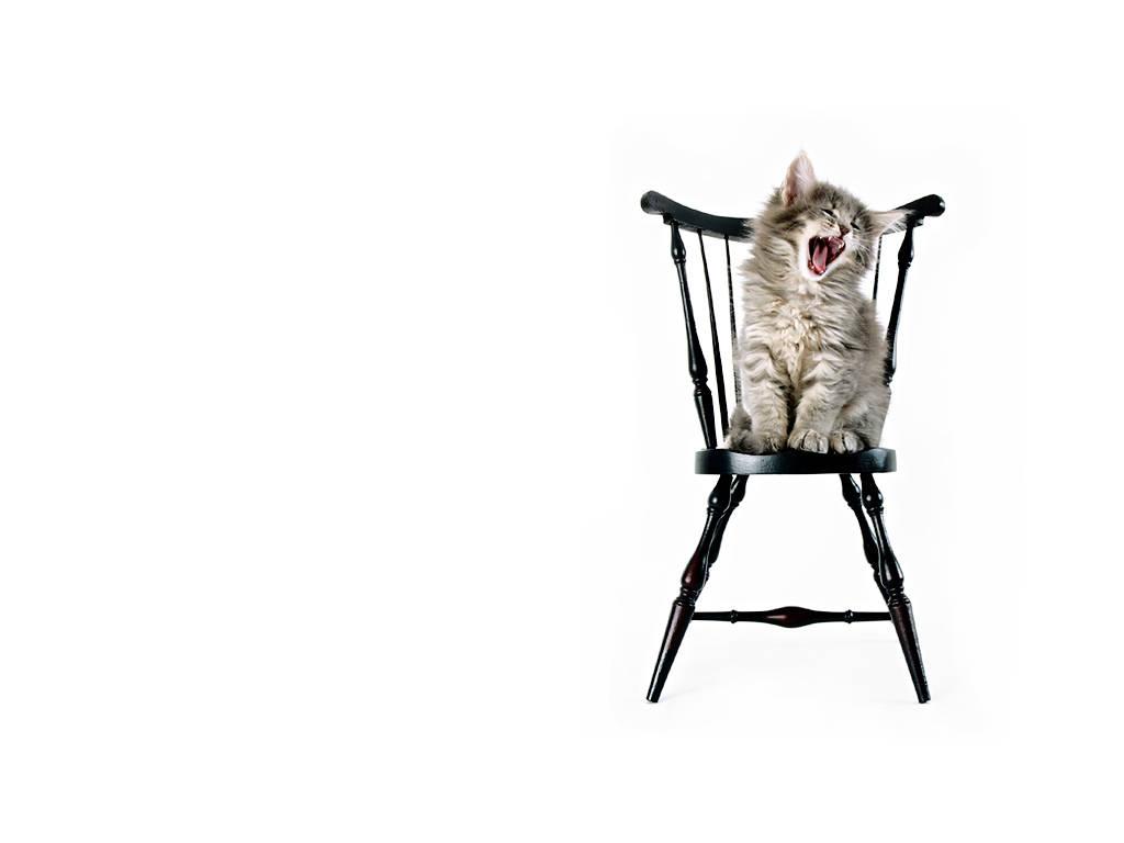 http://2.bp.blogspot.com/-BgoBn-t08uQ/TdyjqYjNmxI/AAAAAAAAAD0/EF26L2TKMtg/s1600/kitten-troubles-cute-cats-backgrounds.jpg