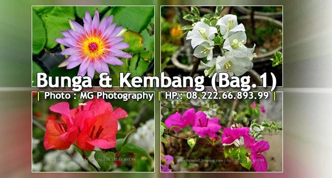 Judul Foto : BUNGA & KEMBANG (Bag.1) || Fotografer Copyright : MG Fotografi - Fotografer Purwokerto || Total Photos : 9 Set  ||  Waktu Pemotretan : 19 Feb 2014 - 09:00 WIB || URL : http://mg-fotografi.blogspot.com/2014/02/bunga-kembang-bag1-oleh-mg-foto.html