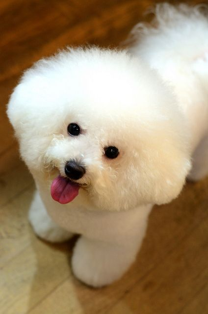 Top 10 Cutest Dog Breed Of World