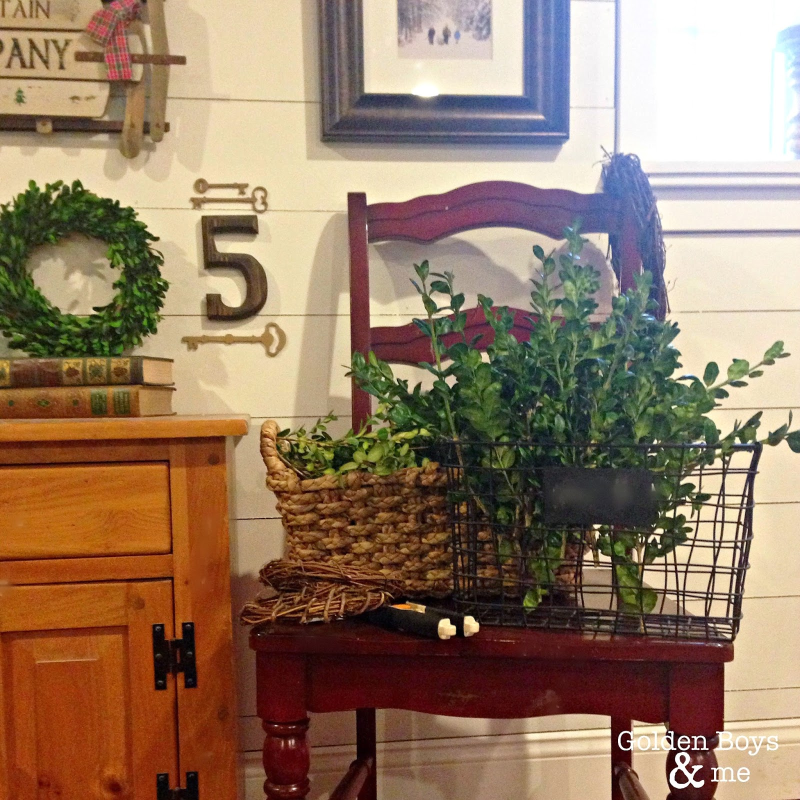 Boxwood clippings on red chair with plank wall-www.goldenboysandme.com