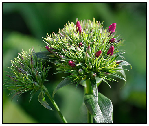 growing with plants a trick around growing 'green trick, Natural flower