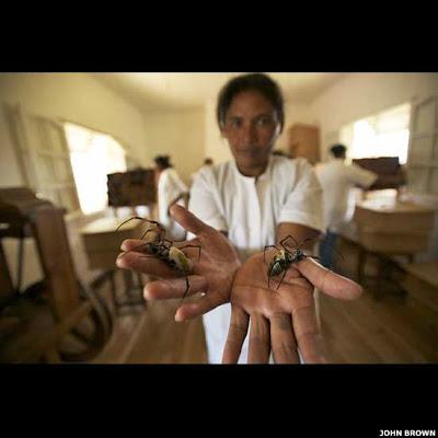 الوشاح والكاب, مشروع سيمون بيرز ونيكولاس غودلي , مليون عنكبوت,