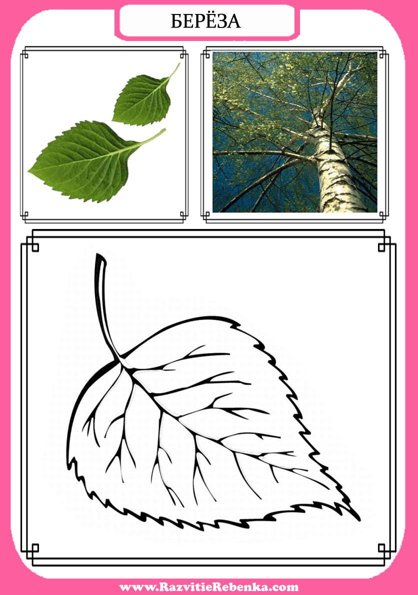 Как сделать паспорт дерева 2 класс фото 796