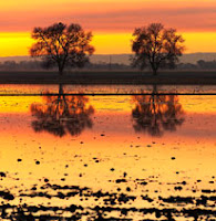 New Photos- Sacramento  Valley in Winter