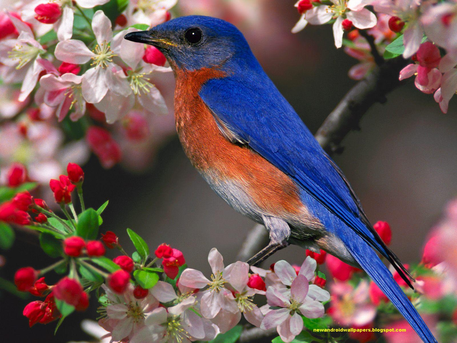 beautiful blue bird wallpaper hd free download for android