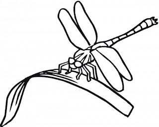 desenho de libélula para pintar, imprimir e colorir