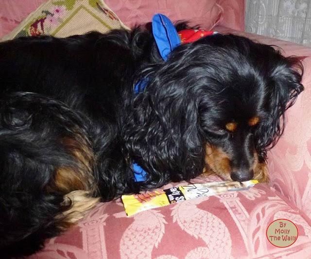 Molly The Wally & Her Bandana!