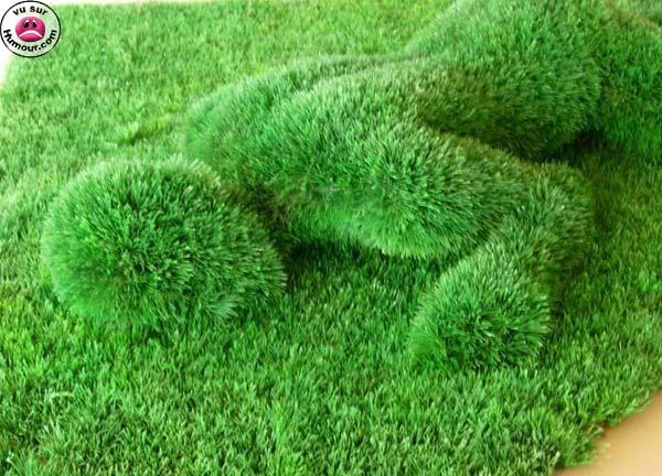 how to get centipede grass to spread