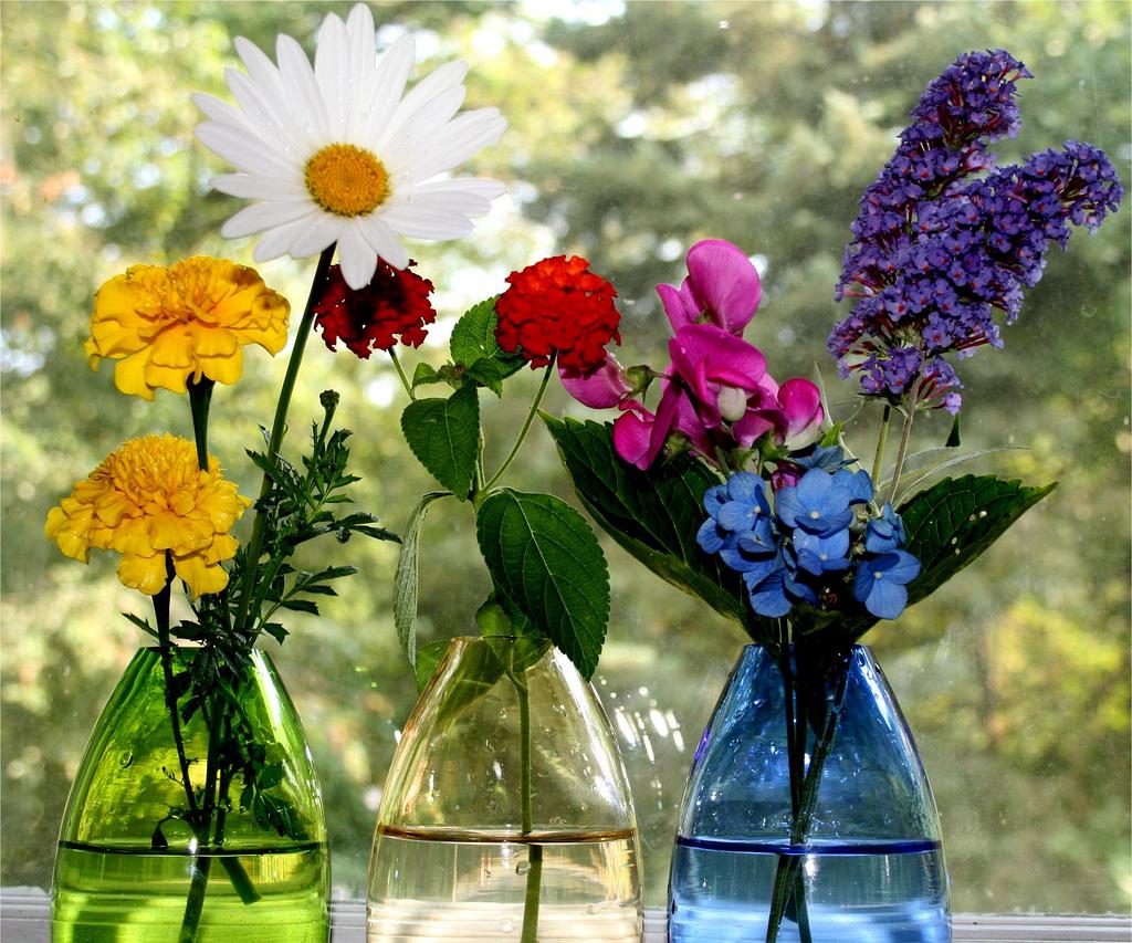 Eat Live Grow Paleo : Indulge in Fresh Flowers1024 x 853 jpeg 535kB