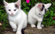 Beautiful Cats HD