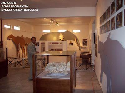 Η χώρα των Ρινόκερων στο μουσείο απολιθωμένων θηλαστικών στην Κερασιά της Εύβοιας