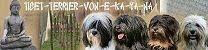 Unsere Tibet Terrier Zucht