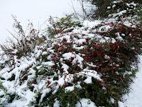 Fond d'écran décembre 2011 - Buisson sous la neige