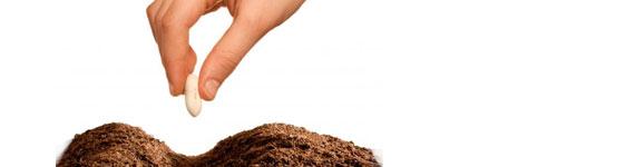 Esterilizar Terra para semear