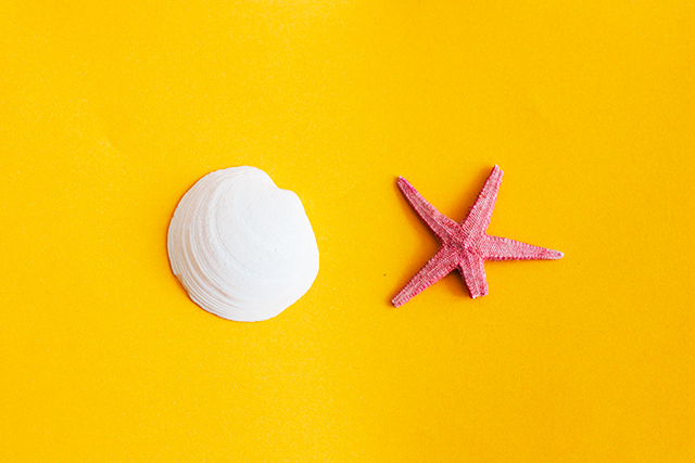 shell and starfish on yellow