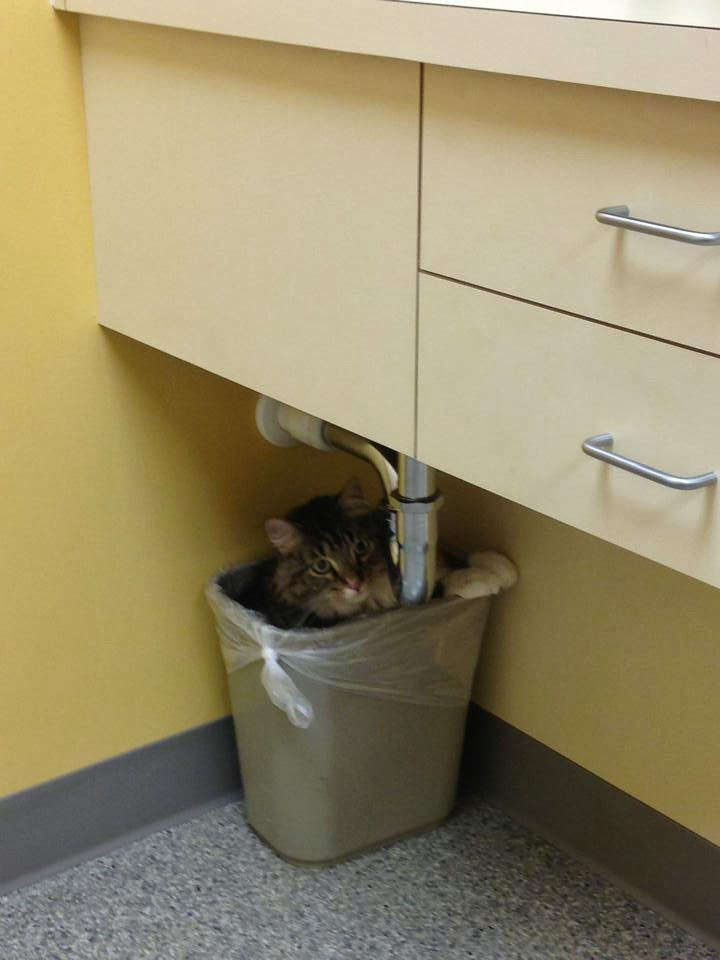 Funny cats - part 92 (40 pics + 10 gifs), cat hides in garbage bin