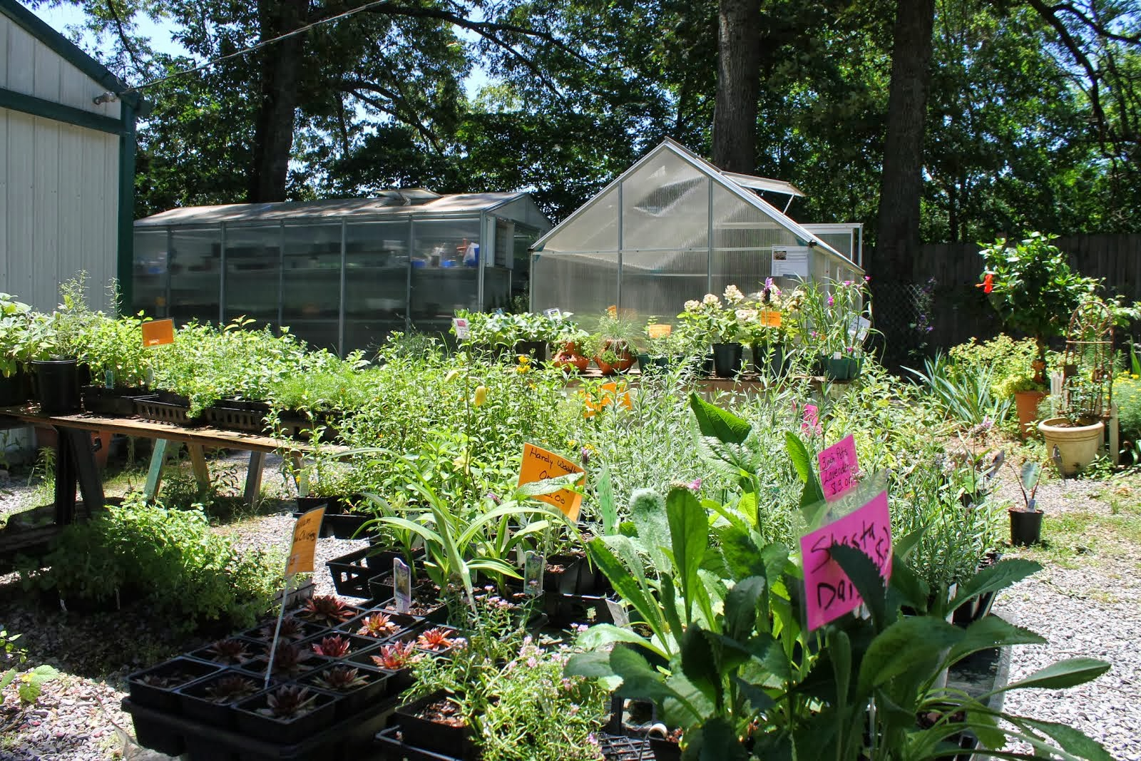 Gardening Tips for Small Spaces: About Mimi's Greenhouse Sales on green lavender, green gardening, green butternut squash, green beets, green bonsai, green tulips, green nature, green shrubs, green bushes, green perennial, green garden design, green flowers,