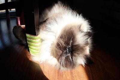 goma-sunbathing01