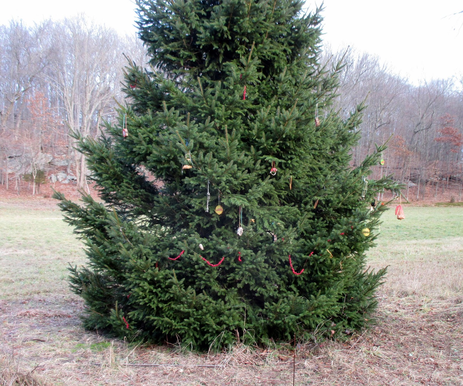 Shelton Trails Committee: I\'m Dreaming of a Warm Christmas
