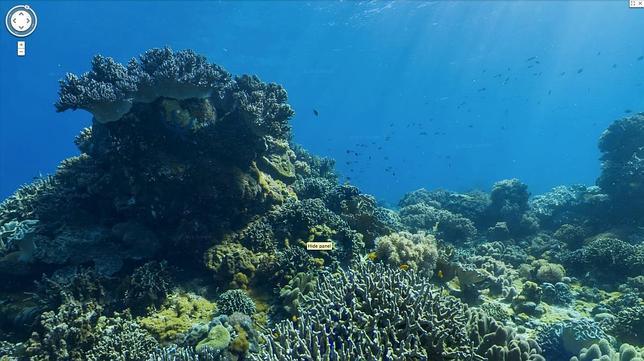 Recursos google descubre el fondo del mar a trav s de - Fotos fondo del mar ...