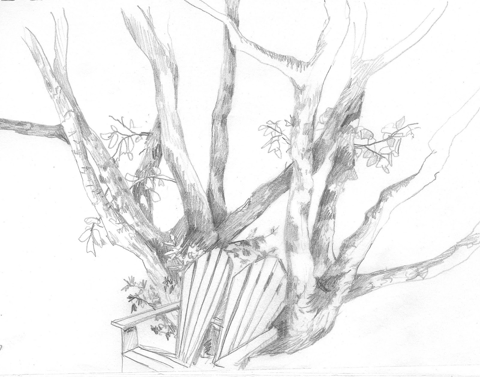 Displaying 20> Images For - Walnut Tree Drawing...
