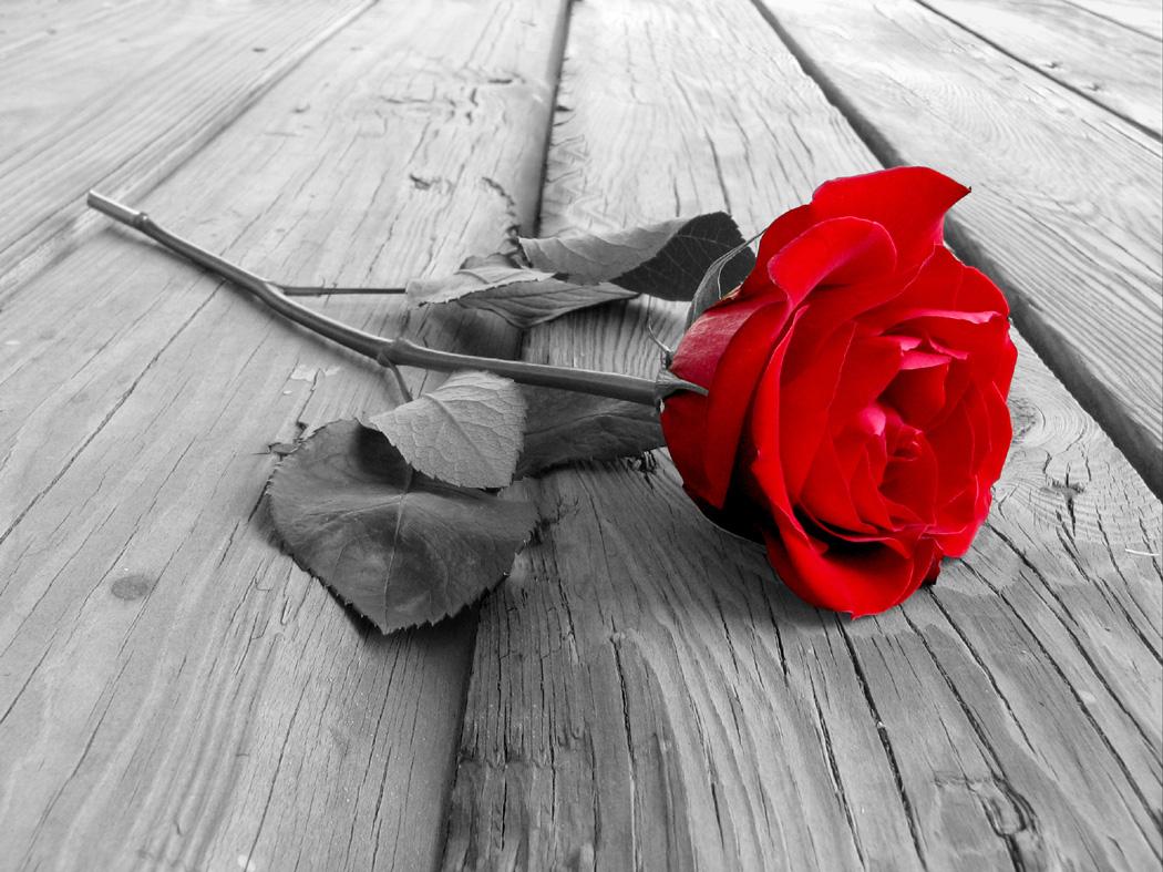 Querida GENI  tu recuerdo y perfume siempre estaran presentes.