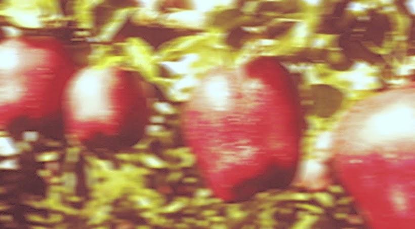 Cultivando Manzanos