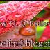 Segmen Saya Follow U,U Follow Me By mselim3