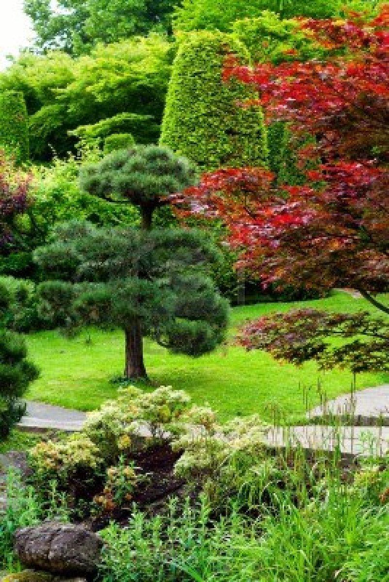 Arte y jardiner a como ubicar y plantar rboles for Arboles preciosos para jardin
