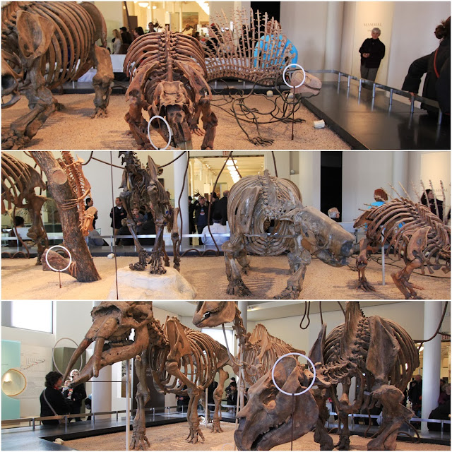Phascolonus (Giant Wombat), Edaphosaurus (Big Lizard), Glossotherium (Armadillo), Smiladan (Saber Toothed Cat) and Toxrodon at Museum of Natural History in New York City, USA