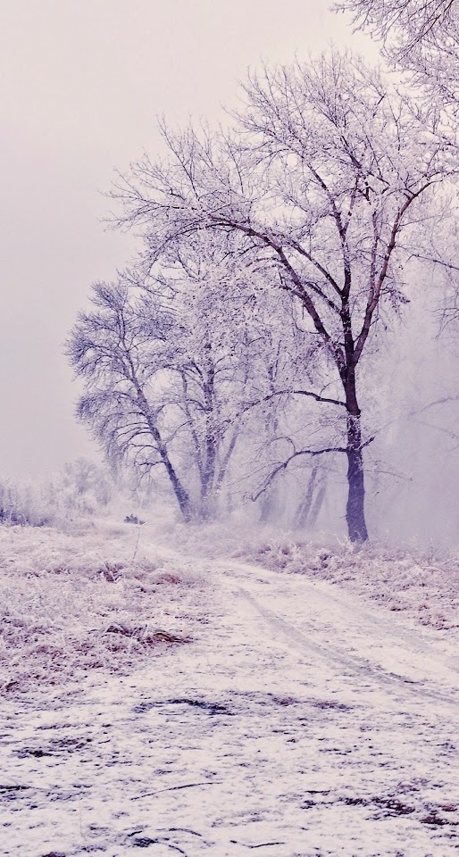 Winter Path Trees Landscape  Galaxy Note HD Wallpaper
