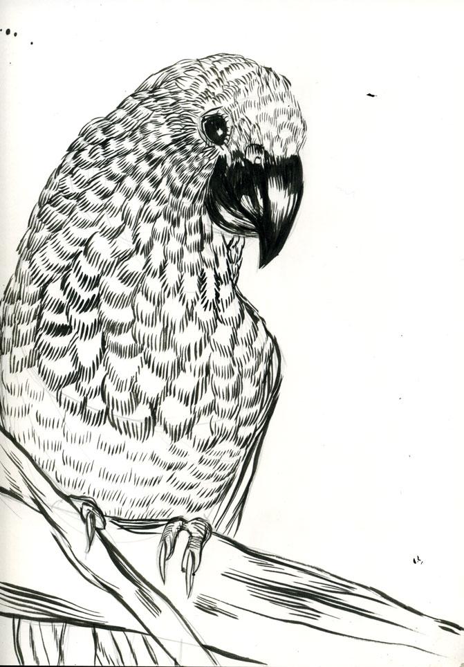 Monty python dead parrot coloring pages